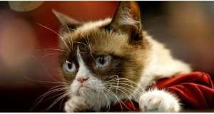 Miért szeretjük a kiscicás videókat?   Emlékezzünk Grumpy Cat-re